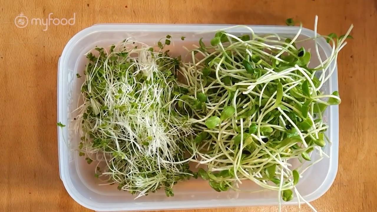 Conservation des micropousses dans un contenant hermétique au réfrigérateur