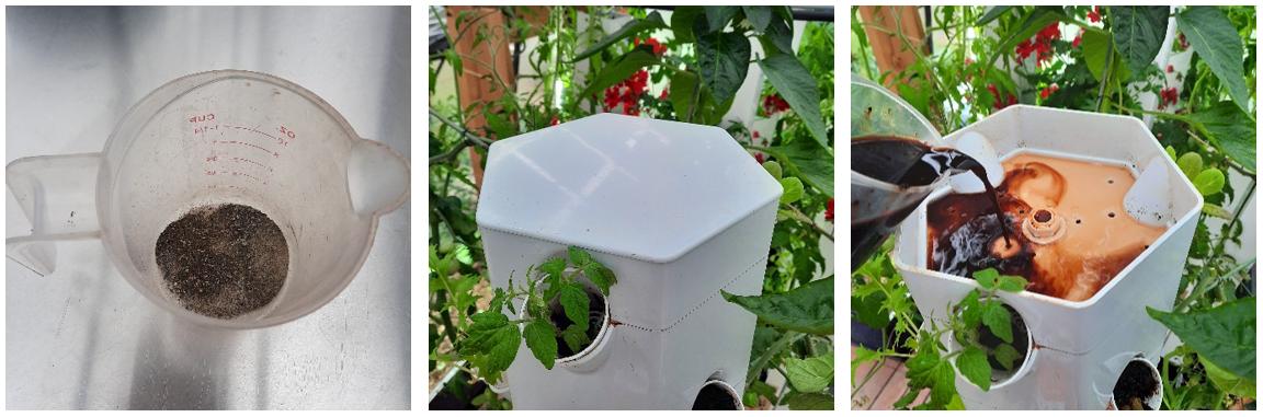 Ajout d'activateur racinaire dans le jardin vertical