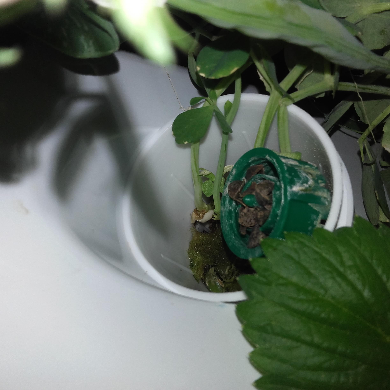 Application pour le jardin vertical Aerospring