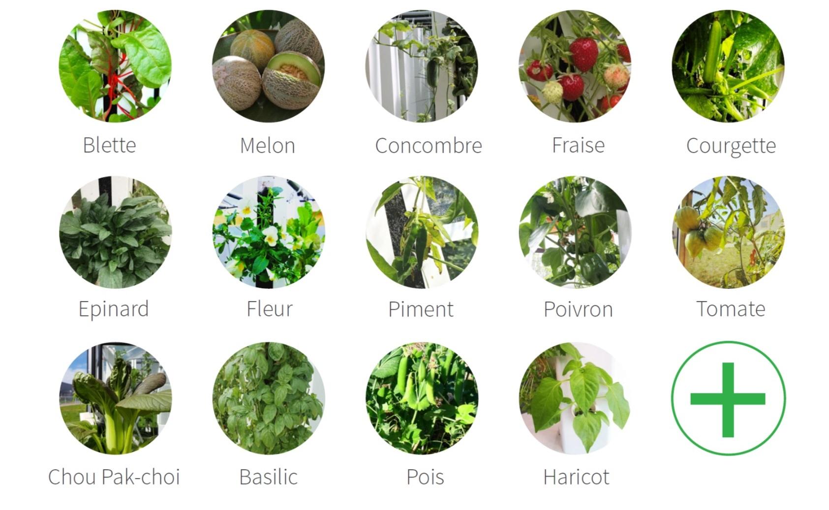 Espèces de plants d'été adaptés à la culture en Aerospring