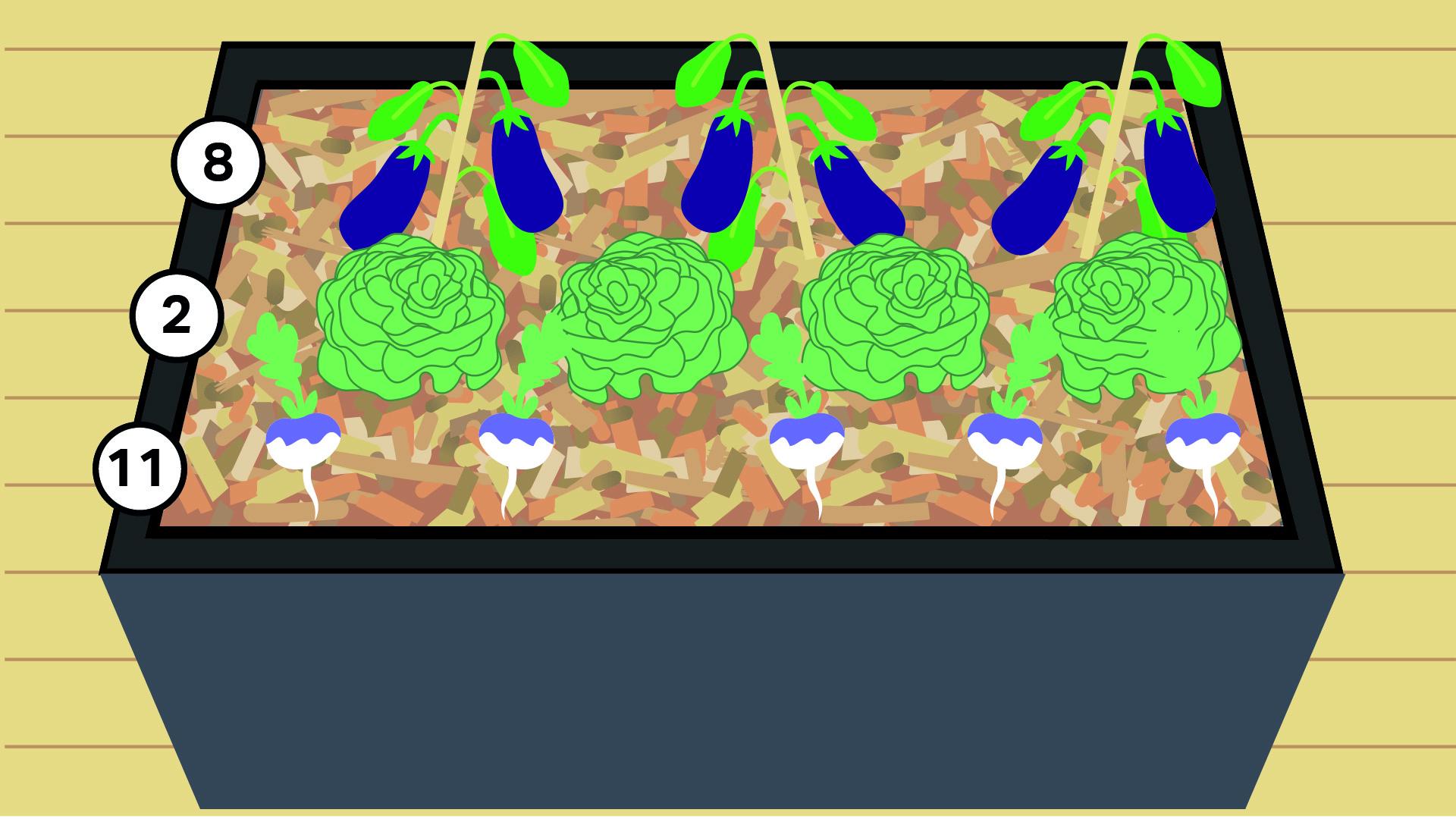 8 - Aubergine 2 - Laitue 11- Navet (panais ou radis noirs possibles)