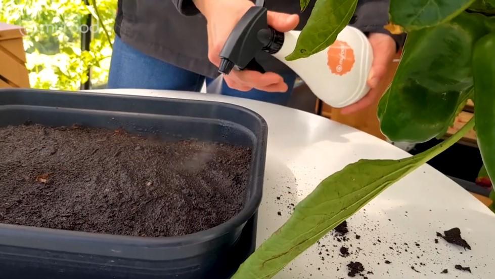 Humidification du terreau par pulvérisation