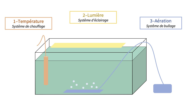 Schéma du milieu de culture de la spiruline 1 - Système de chauffage (résistances chauffantes) 2 - Système d'éclairage (lampes LED) – Pour la croissance de la spiruline grâce à la photosynthèse  3 - Système d'aération (pompe à air) –  Pour le brassage de la spiruline et la diffusion du CO₂