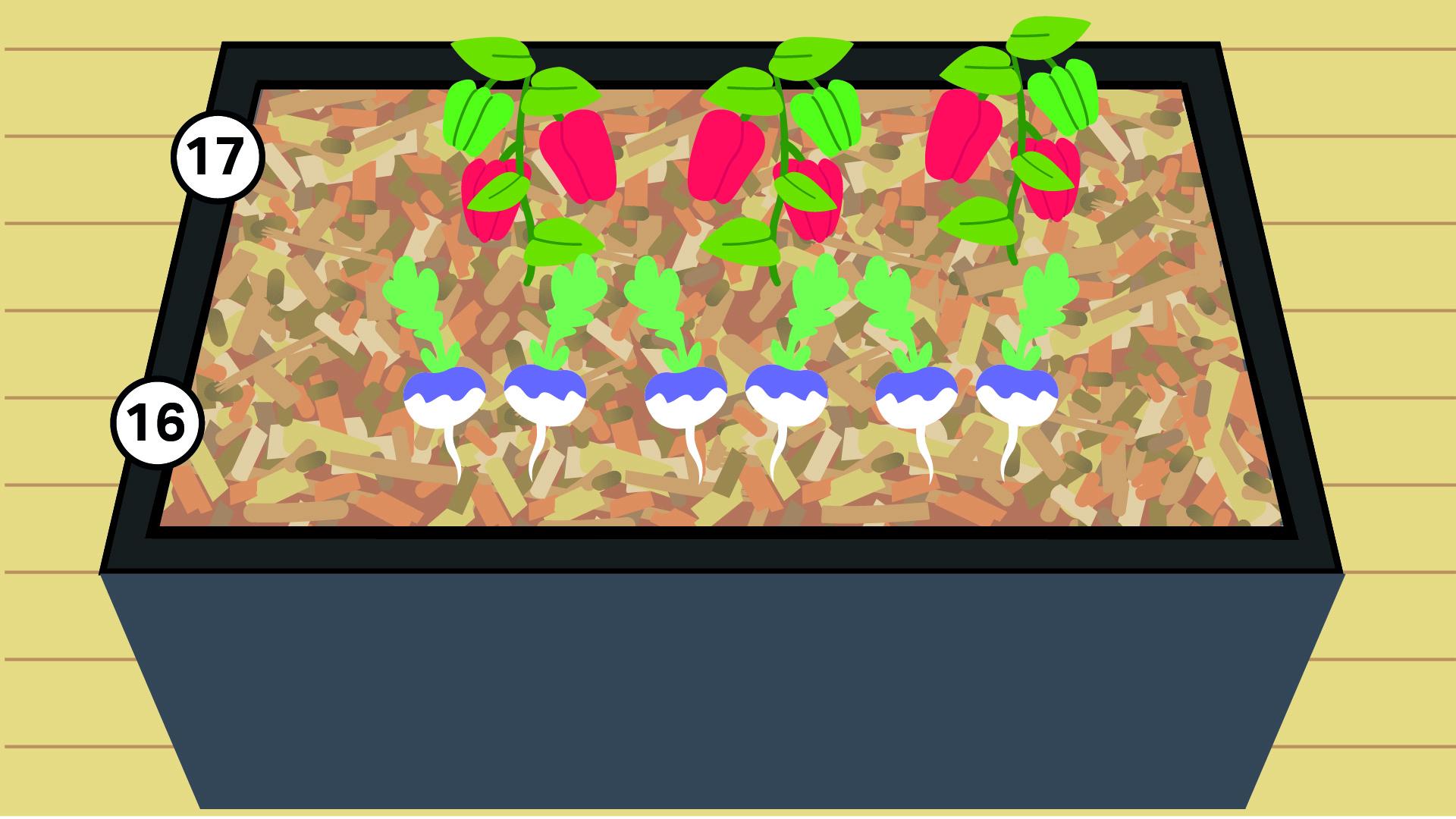 16 - Poivron 17 - Navet (panais ou radis noirs possibles)