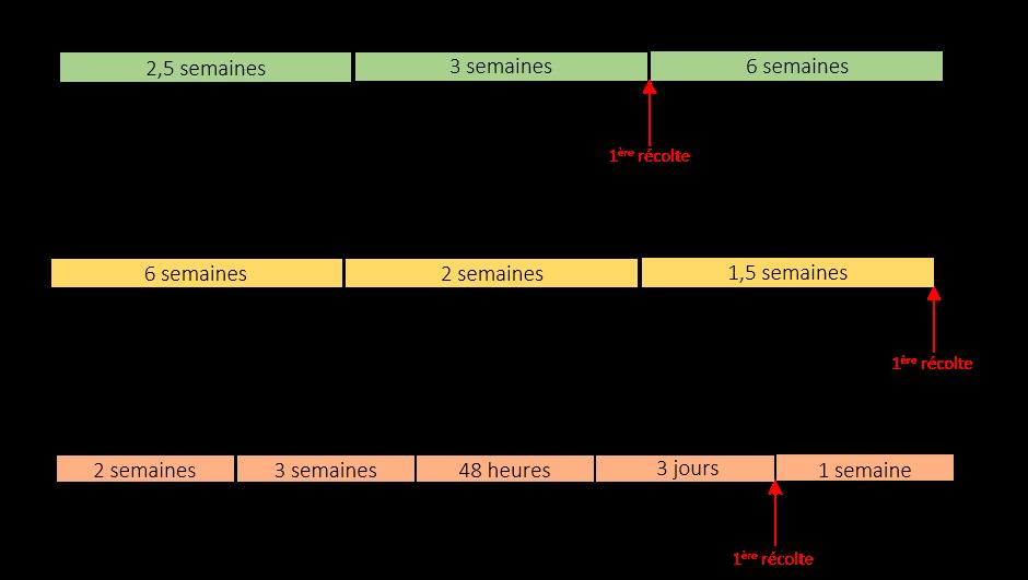 Résumé des étapes de culture pour chaque variété.