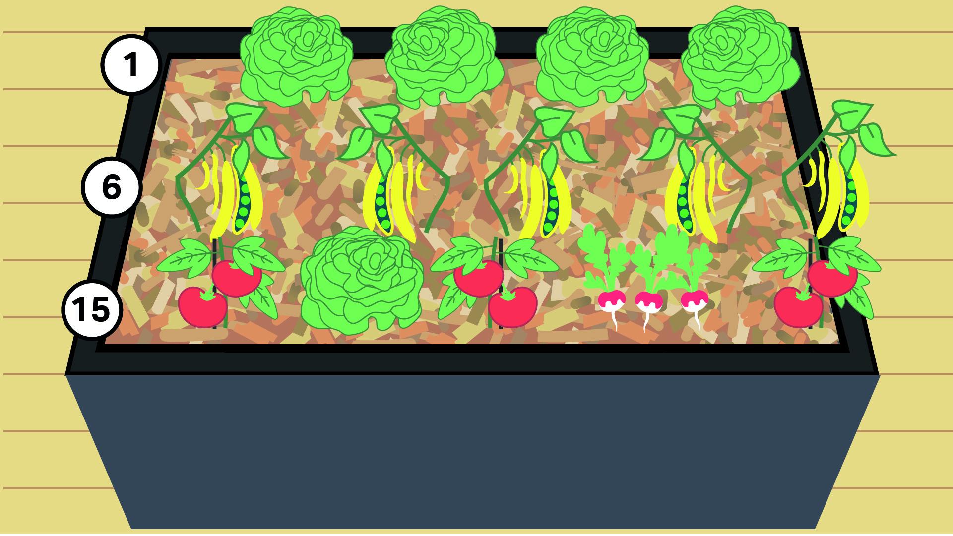 1 - Laitue 6 - Haricot 15 - Tomate
