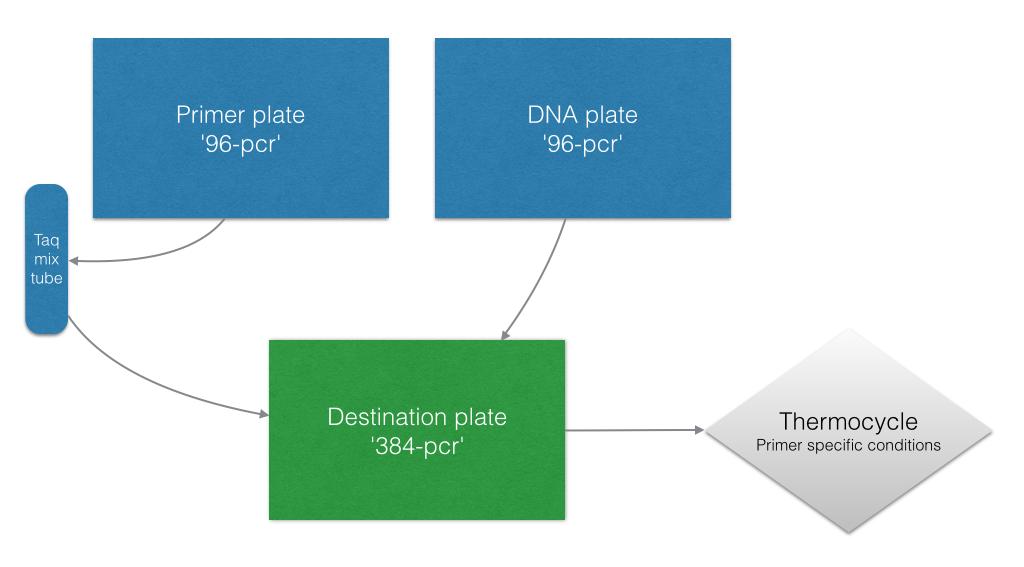 PCR basic workflow